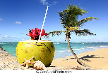 palm tree in a tropical beach on a sunny day