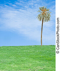 palm tree in field