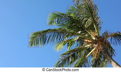 Palm tree in Florida - Blue sky palm tree in Florida...