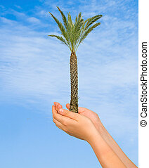 Palm tree in hands