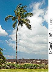 Palm tree in Kona on Big Island Hawaii with lava field in background
