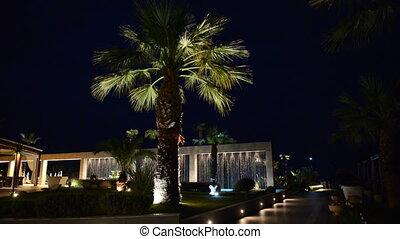 Palm tree in night illumination