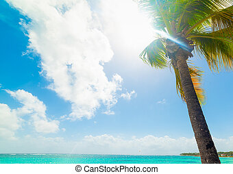 Palm tree in Sainte Anne seafront in Guadeloupe, French west indies. Lesser Antilles, Caribbean sea