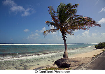 Palm Tree in San Andres Colombia