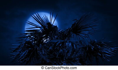 Palm Tree In Strong Winds At Night
