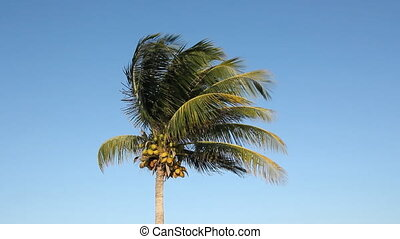 Palm tree in the breeze.