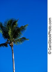 Palm tree in the tropics