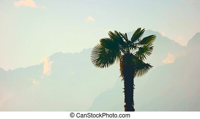 Palm tree in the wind. Tropical plant, mountains and sky.