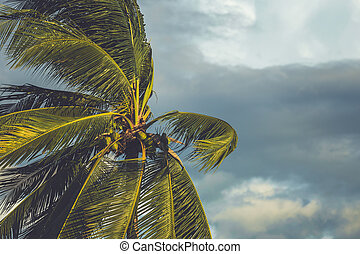 Palm tree in the wind with dark cloud