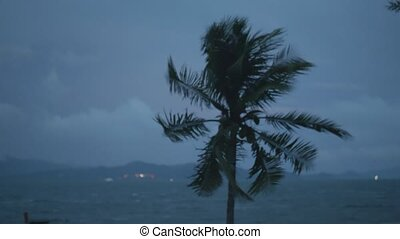 Palm tree in the wind with dark cloudy sky and sea background