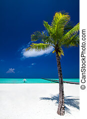 Palm tree in tropical perfect beach at Maldives with jetty