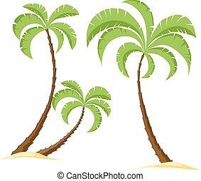 palm tree isolated on white backgro