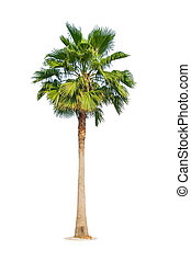 Palm tree isolated on white background. Clipping path...