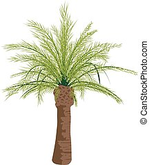 Palm tree isolated on white background, vector template
