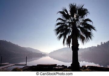 Palm Tree Lake Reflection