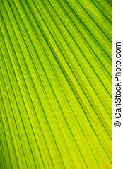 Palm tree leaf background - Botanical abstract background of...