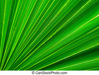Palm tree leaf closeup
