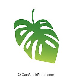 palm tree leaf, Monstera tropical plant