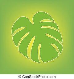 palm tree leaf, Monstera tropical plant