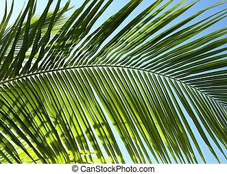 Palm tree leaf N3 - Palm tree leaf and the blue sky
