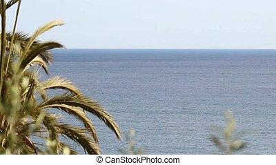 Palm tree leafs blue sea clear sky