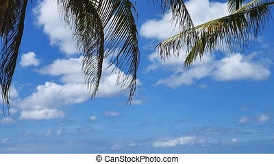 Palm tree leaves and blue sky as background