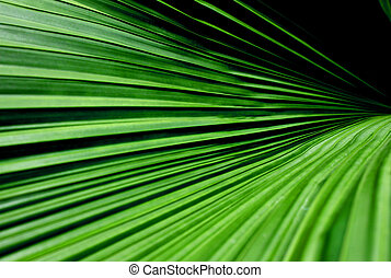 Close up shots of palm tree leaves showing continues lines