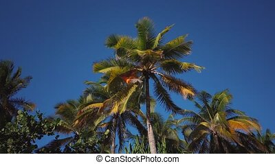 palm tree leaves developing in the wind