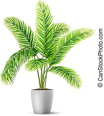 Palm tree leaves in a pot. A plant for decorating an ...