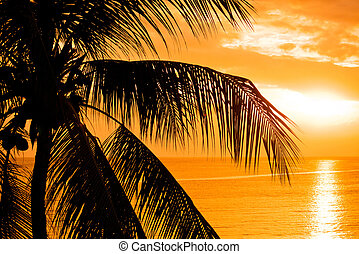 Palm tree leaves in the sunset