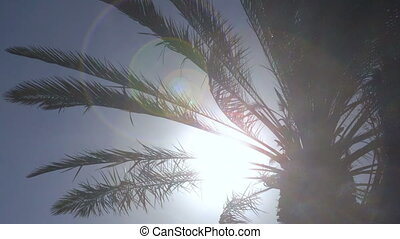 Palm tree leaves in the wind - seamless loop
