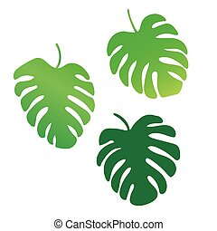 palm tree leaves, Monstera tropical plant