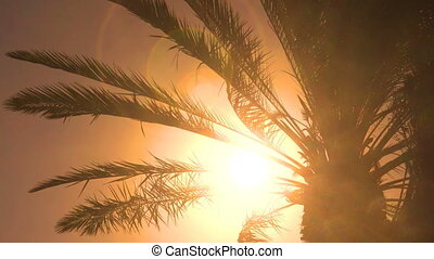 Palm tree leaves - seamless loop - Palm tree leaves in...