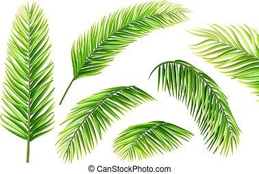 palm tree leaves vector set
