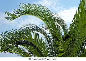 palm-tree, liście