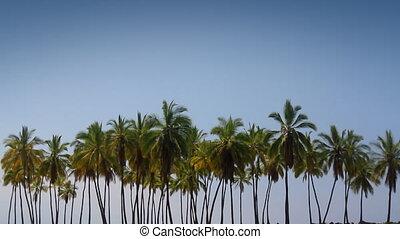 Palm Tree Lineup