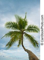 Palm tree low angle