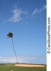 Palm Tree near Sand Trap
