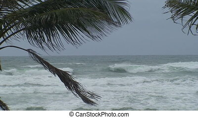 Palm Tree Ocean Storm 2 - A shot of palm trees at the beach...