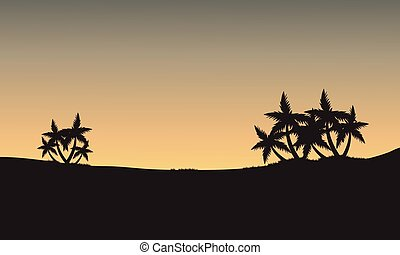 Palm tree of silhouette
