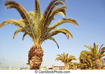 Palm tree on a background of blue sky