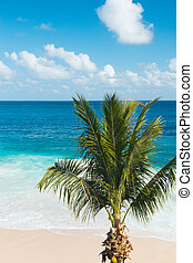 Palm tree on a beautiful beach
