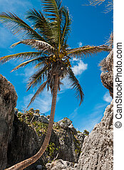 Palm tree on a Caribbean beach in Tulum Mexico