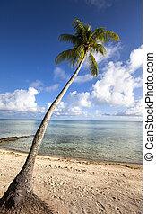 Palm tree on a sandy beach at the c