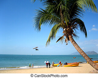 palm tree on a sandy tropical beach with persons