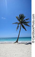 Palm Tree on a sunny day on Caribbean beach