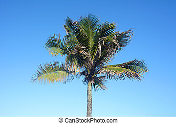 Palm tree on a sunny day.