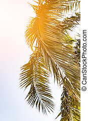 Palm tree on a sunny summer day