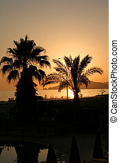 Palm tree on a sunset