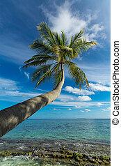 Palm tree on a tropical beach